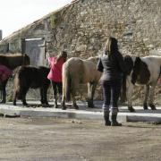 attache chevaux