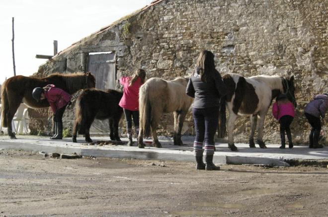 préparation des poneys